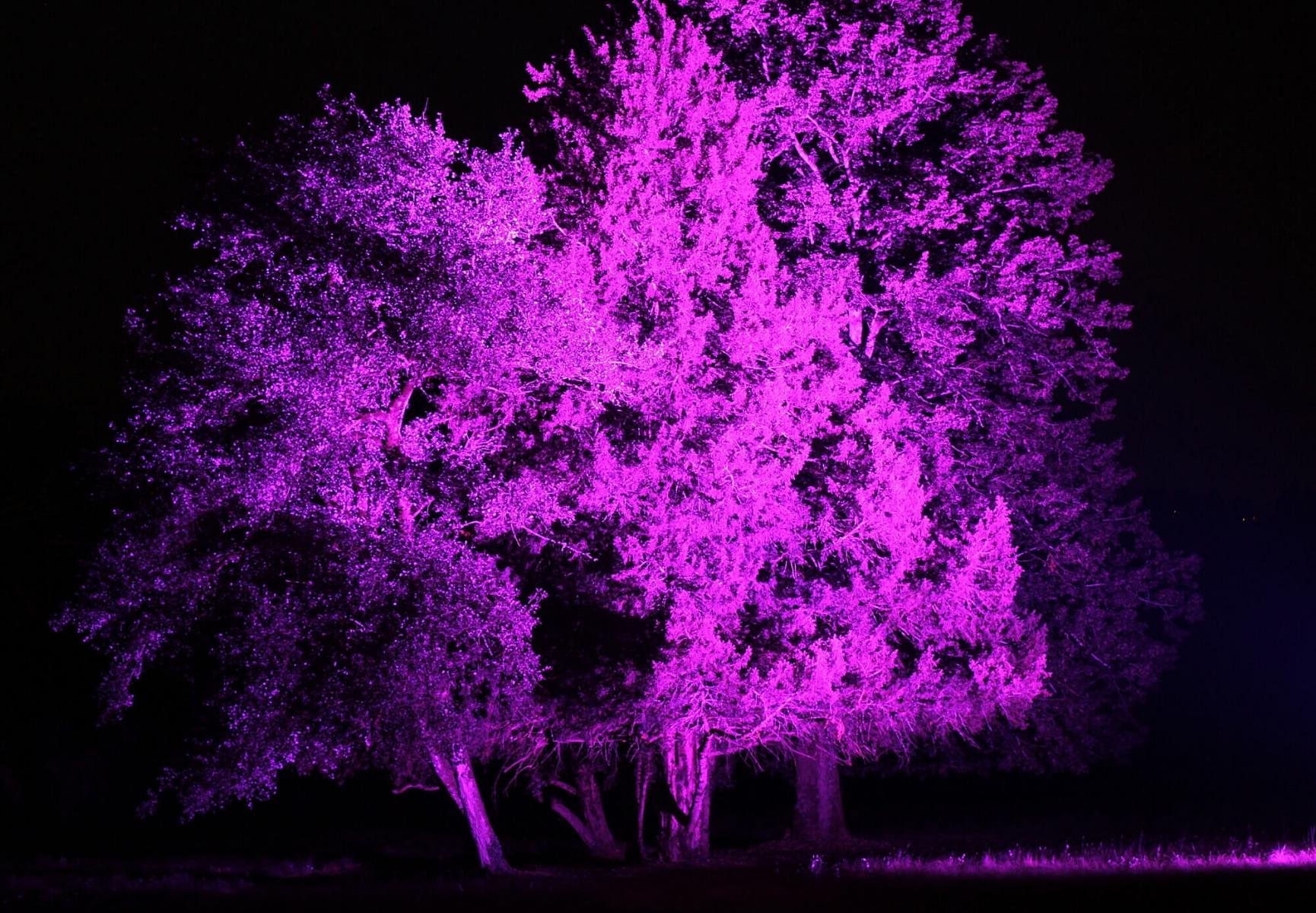 Mise en lumière d'arbres dans un jardin